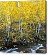 Autumn Stream Iv Canvas Print