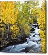 Autumn Stream V Canvas Print