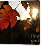 Autumn Sunburst Canvas Print