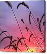 Autumn Sunrise At The Cemetery On Coal Bank Canvas Print