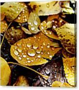 Autumn Tears Canvas Print