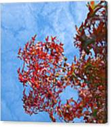 Autumn Trees Art Prints Blue Sky White Clouds Canvas Print