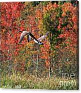 Autumn Vermont Geese And Color Canvas Print