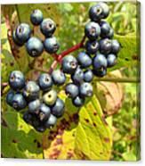 Autumn Viburnum Berries Series #3 Canvas Print