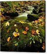 Autumn View Shows Fallen Leaves Canvas Print