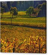 Autumn Vineyards Canvas Print