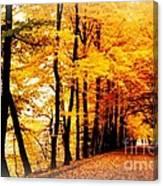 Autumn Walk In Belgium Canvas Print