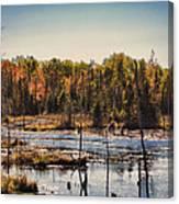 Autumn Wetland Canvas Print