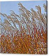 Autumn Wind Through The Grass Canvas Print