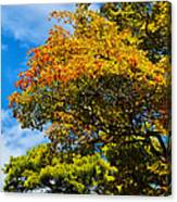 Autumnal Fruition Canvas Print