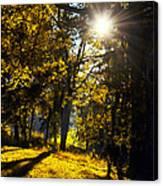 Autumnal Morning Canvas Print