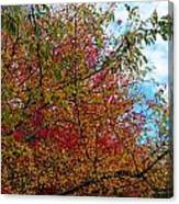 Autumns Beauty Canvas Print