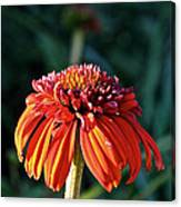 Autumn's Cone Flower Canvas Print