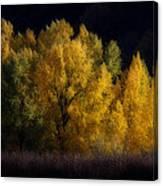 Autumn's Last Hurrah Canvas Print