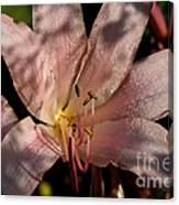Autumn's Lily Canvas Print