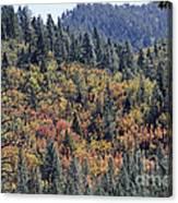 Autumns Palette Canvas Print