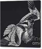 Avocet Canvas Print