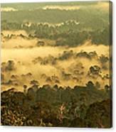 Awakening Forest Canvas Print