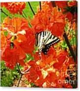 Azalea And Butterfly 1 Canvas Print