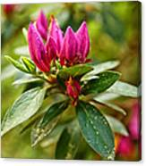Azalea Blast Vertical Canvas Print