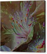 Azalea Rock Canvas Print