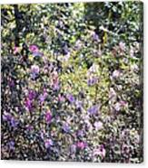 Azaleas In The Forest Canvas Print