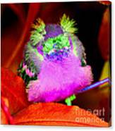 Baby Bird Of A Different Color Canvas Print