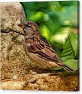 Baby Birdie Canvas Print