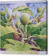 Baby Breadfruit Canvas Print