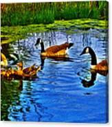 Baby Ducks Canvas Print