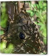 Baby Eastern Cottontail Rabbit Dmam011 Canvas Print
