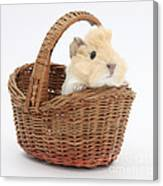 Baby Guinea Pig In A Wicker Basket Canvas Print