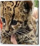 Baby Jaguar Canvas Print