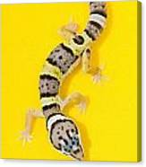 Baby Leopard Gecko Canvas Print