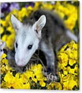 Baby Opossum In Flowers Canvas Print