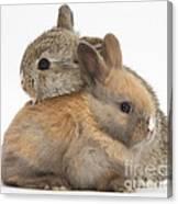Baby Rabbits Canvas Print
