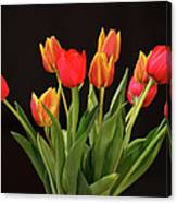 Baby Tulips Canvas Print