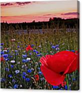 Bachelor Buttons And Poppies Canvas Print