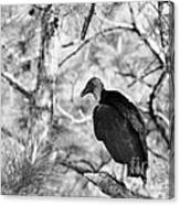 Back In Black Canvas Print