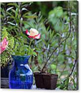 Back Yard Roses Canvas Print