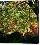 Backlit Autumn Canvas Print