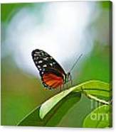 Backlit Butterfly Canvas Print