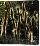 Backlit Cactus Canvas Print