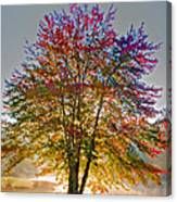 Backlit Maple In Autumn's Light Canvas Print