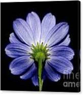 Backside Of A Blue Flower Canvas Print