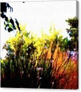 Backyard Hues Canvas Print