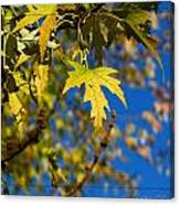 Backyard Leaves Canvas Print