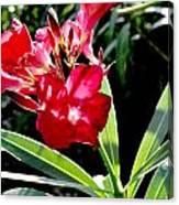 Backyard Red Beauty Canvas Print