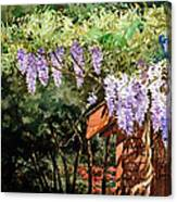 Backyard Wisteria Canvas Print