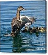 Bad Duck Rising Canvas Print